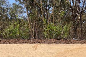 bushland bordering a dirt road